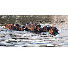 Water Buffalo crossing  Photographic Print