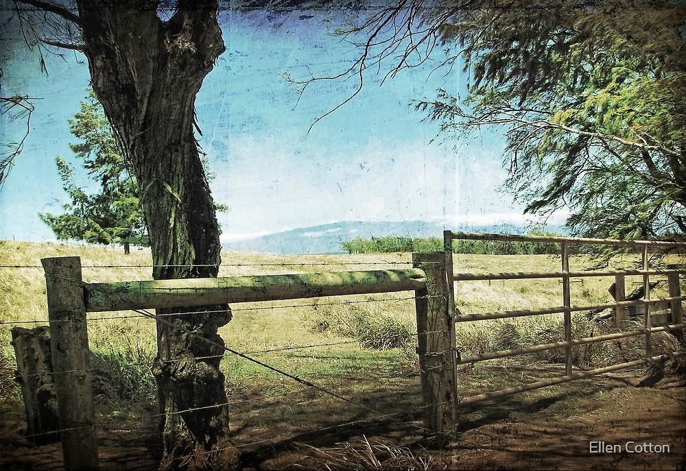 Kohala Ranch by Ellen Cotton
