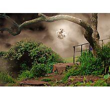 Mystery Corner Photographic Print