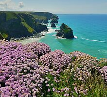 Cornwall: Sea Pinks at Bedruthan by Rob Parsons