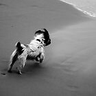 Dog On The Beach by joshbshp