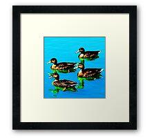 Ducks 3 Framed Print