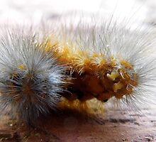 Caterpillar Close Up by WildestArt