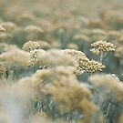 une impression de Provence by SandrineBoutry