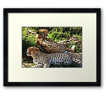 Cheetah - Masai Mara - Kenya Framed Print