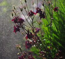 Immersion Series - Aquilegia Rain by rennaisance