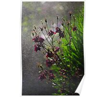 Immersion Series - Aquilegia Rain Poster