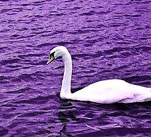 Violet Swan by Shahriar Uddin