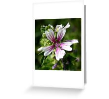 Zebra Mallow Flower Greeting Card