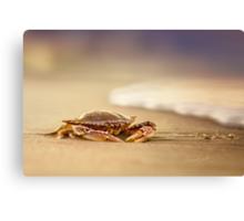 Crab Charybdis Canvas Print