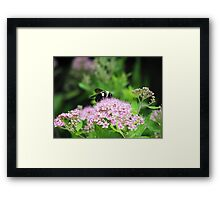 Bumble Bee, Bumble Bee Framed Print