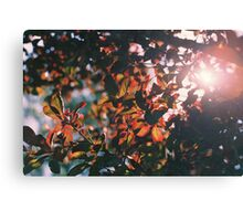 Leaves and Sun Canvas Print