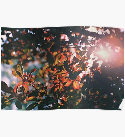 Leaves and Sun Poster
