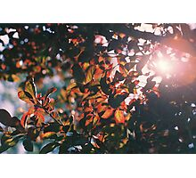 Leaves and Sun Photographic Print