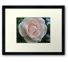 Simple Rose Framed Print