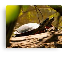 Sunbathing Canvas Print