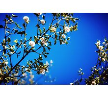 : Super Blue : Photographic Print
