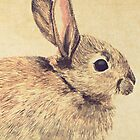 Watercolour Rabbit SKetch by Lisa Marie Robinson