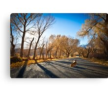: In Lone Pine, One Corgi : Canvas Print