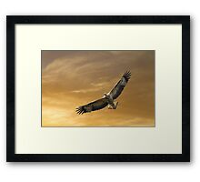 Catching Rays Framed Print