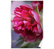 The Pink Peony Poster