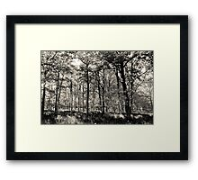 A English forest Framed Print