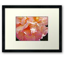 Peaches & Cream Framed Print