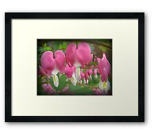 """ Bleeding Hearts "" Framed Print"