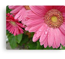 """""""Pink Daisy Of Hope"""" Canvas Print"""