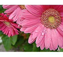 """""""Pink Daisy Of Hope"""" Photographic Print"""