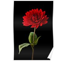 Single Red Dahlia Flower Wall Art Poster