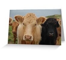 Cornish Stand-off Greeting Card