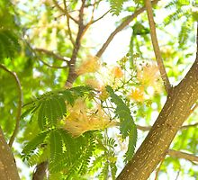 Mimosa by BlackTopaz