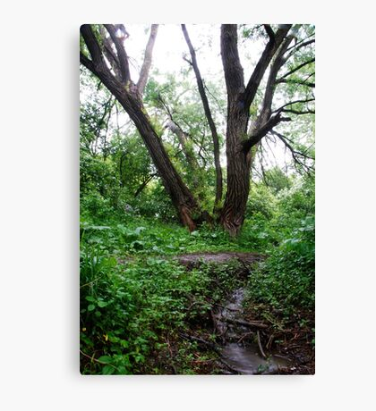 Grandfather Willow Canvas Print