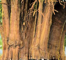 The Giant Grasshopper / El chapulin gigante by Bill Blair