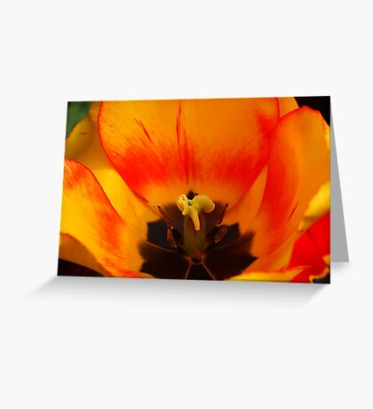 tulip up close and personal Greeting Card