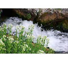 Wildflowers by the Water Photographic Print