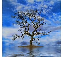 Tree On An Island Photographic Print