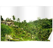 Balinese paddies Poster