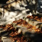 Steps and autumn leaves by Kelly Eaton