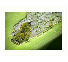 The Hungry Little Caterpillars Art Print