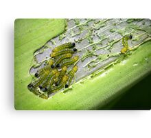 The Hungry Little Caterpillars Canvas Print