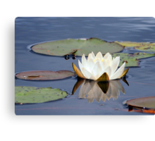 Water Lily and Reflection Canvas Print