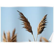 Winged Wheat Poster