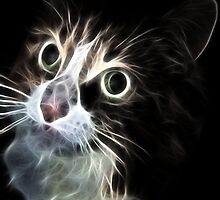 <º))))>< CAT LOOKS VERSION ONE CARD/PICTURE<º))))><  by ✿✿ Bonita ✿✿ ђєℓℓσ