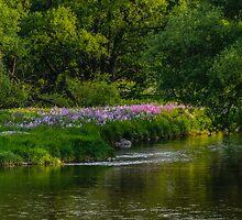 Pseudo Phlox Along The River's Edge  by jules572