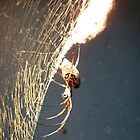 Shelob's Baby by wickedmommicked