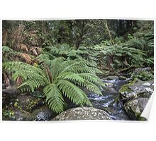 Otway National Park Poster