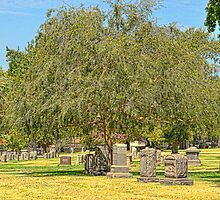 Cemetery by mandymoore