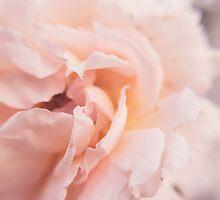 Petals. by Lindsay Osborne
